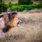 מחקרי ישראל הקדומה- האריה