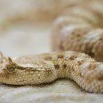 מחקרי ישראל הקדומה- הנחש