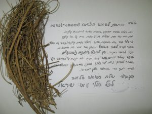 צמח הספאר לצהבת יילודים